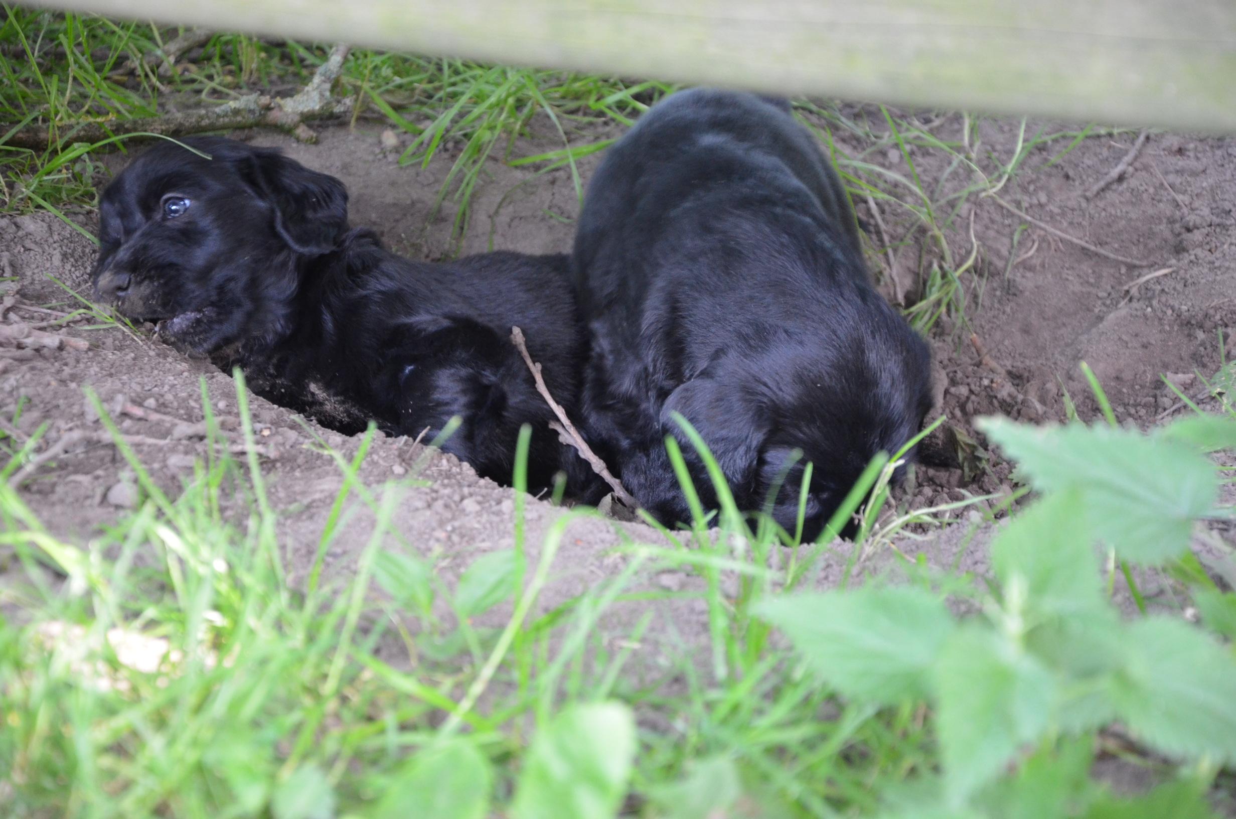 Stinchen Babys Juli 12 Portraits13 0112