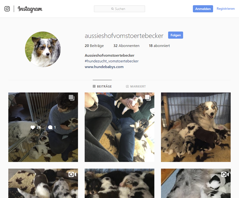 Hundebabys.com Auf Instagram